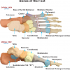 Base of the 5th (Metatarsal)